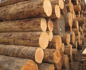 铁杉千亿国际登录加工