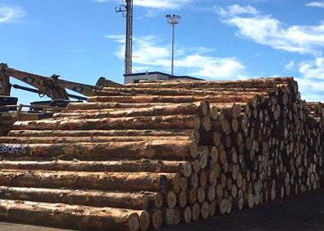 辐射松原木堆放区